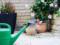7 važnih  pravila kojih se moramo pridržavati prilikom zalijevanja biljaka
