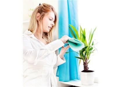 Proljetno čišćenje s prirodnim sredstvima