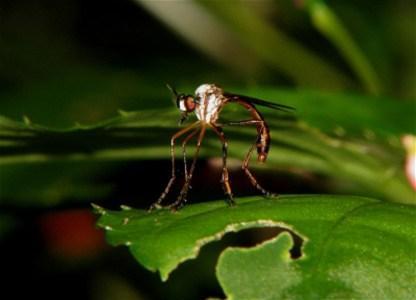 8 trikova kojima možete nadmudriti komarce