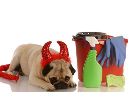 Možete li zaista temeljno čistiti i bez kupovnih hemikalija?