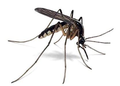 Šta uistinu znate o komarcima?