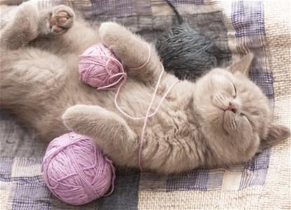 Šta sve liječi mačka kad prede?