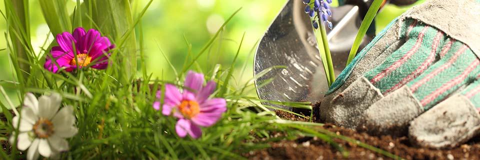 Vrt i okućnica